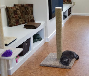 Houdini using the scratching post