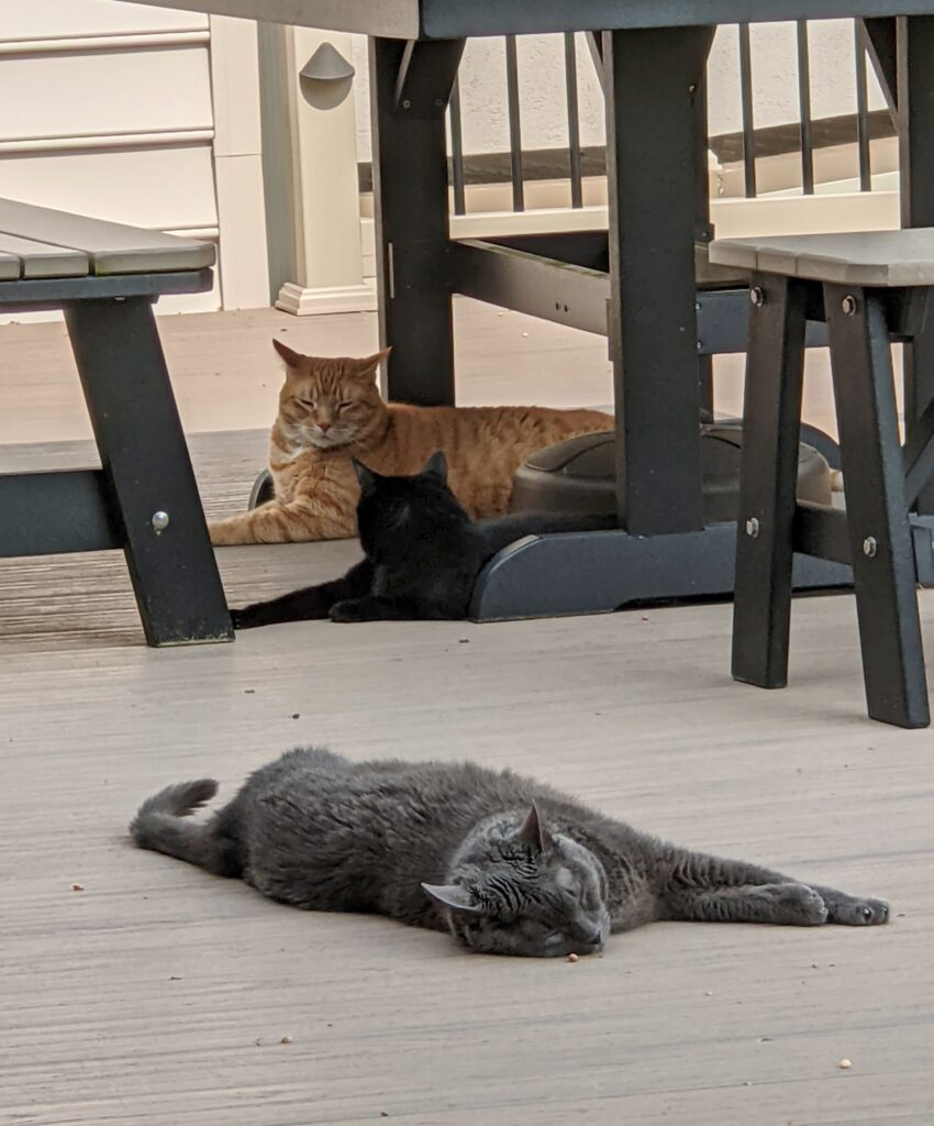 Cats Chillin' on the Deck